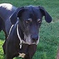Adopt A Pet :: Presley - Mesa, AZ