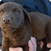 Adopt A Pet :: Sterling - Prosser, WA