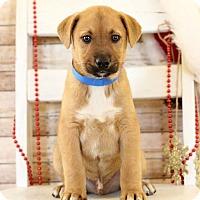 Adopt A Pet :: Tosh - Waldorf, MD
