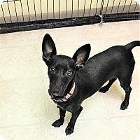 Adopt A Pet :: Black Jack - Tavares, FL