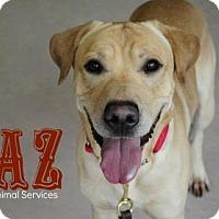 Adopt A Pet :: Taz - Hamilton, ON