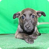Adopt A Pet :: Nichola - San Diego, CA