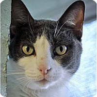 Adopt A Pet :: Tippi - Carencro, LA