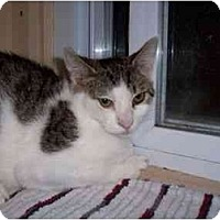 Adopt A Pet :: Izzy - North Plainfield, NJ