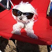 Adopt A Pet :: ***Coco*** - Rockaway, NJ