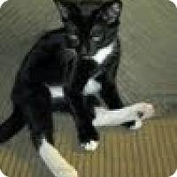Adopt A Pet :: Sketch - Modesto, CA