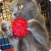 Adopt A Pet :: Europa - Harrisburg, NC