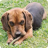 Adopt A Pet :: Barnes - Homewood, AL