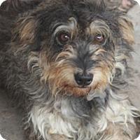 Adopt A Pet :: Mica - Norwalk, CT