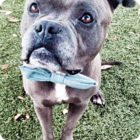 Adopt A Pet :: Gruff - Orlando, FL