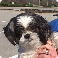Adopt A Pet :: Mr Wilson - LEXINGTON, KY