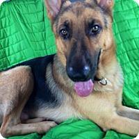 Adopt A Pet :: Thor - Pompano Beach, FL