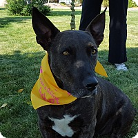 Adopt A Pet :: Bruce Wayne - Bend, OR