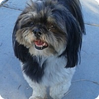 Adopt A Pet :: Desi - Las Vegas, NV
