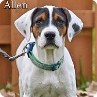 Adopt A Pet :: Allen - Pleasant Plain, OH