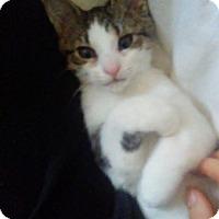 Adopt A Pet :: Guinevere - Richmond, VA