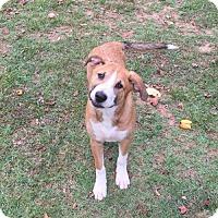 Adopt A Pet :: Brewster-Honey B - Temple, GA