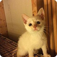 Adopt A Pet :: A Simon - Rochester, MI