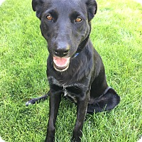 Border Collie/Shepherd (Unknown Type) Mix Dog for adoption in Boise, Idaho - Nessie