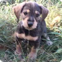 Adopt A Pet :: Bart - Birmingham, AL