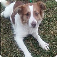 Adopt A Pet :: Hazel - Paris, IL