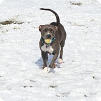 Adopt A Pet :: Jasmine - Gardnerville, NV