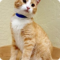 Adopt A Pet :: Fiddler - Fresno, CA