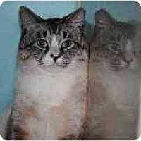 Adopt A Pet :: Rudy - Marietta, GA