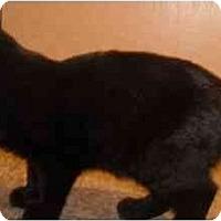 Adopt A Pet :: Milli - Mesa, AZ