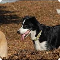 Adopt A Pet :: Roper - Ft. Myers, FL