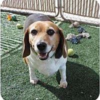 Adopt A Pet :: Chloe Denise - Phoenix, AZ