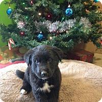 Adopt A Pet :: Batman - Saskatoon, SK