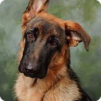 Adopt A Pet :: Titan - Wayland, MA