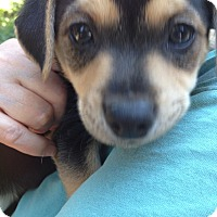 Adopt A Pet :: Parsley - Gig Harbor, WA