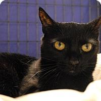 Adopt A Pet :: Haylie - Winchendon, MA