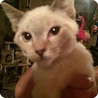 Adopt A Pet :: LA-Mishka - Broomall, PA