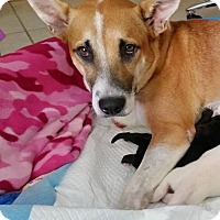 Adopt A Pet :: Paca - Ft. Lauderdale, FL