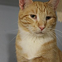 Adopt A Pet :: Marty Jr - New Richmond,, WI