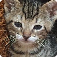 Adopt A Pet :: Maman - Herndon, VA