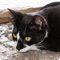 Adopt A Pet :: Funny Face - Sylvania, GA