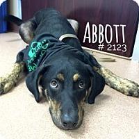 Adopt A Pet :: Abbott - Alvin, TX