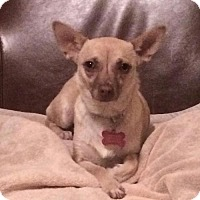 Adopt A Pet :: Mandy (Cali 15) - Whitestone, NY