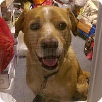 Adopt A Pet :: Sam - Columbus, OH