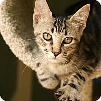 Adopt A Pet :: Cody - McCormick, SC