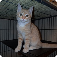 Adopt A Pet :: Toby - North Wilkesboro, NC