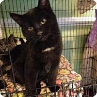 Adopt A Pet :: Blake - Breinigsville, PA