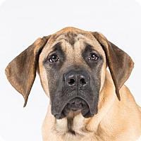 Adopt A Pet :: Stryker - St. Louis Park, MN