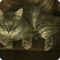 Adopt A Pet :: Earl Grey - Attalla, AL