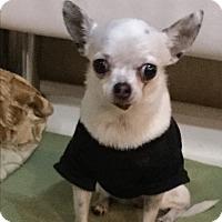 Adopt A Pet :: Priscilla - 3 lb senior - Oakland, FL