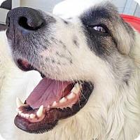 Adopt A Pet :: Lorelei in NJ - new! - Beacon, NY